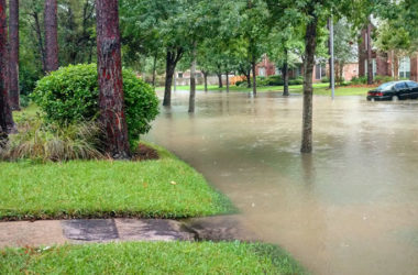 Insights on Impact of Hurricane Harvey From Black Book