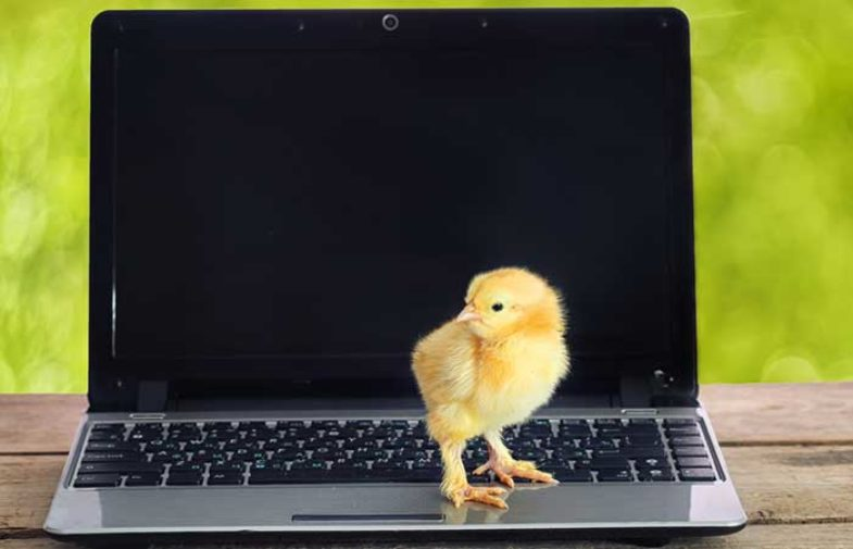 Digital Marketing: Don't Count Your Clicks Before They Hatch
